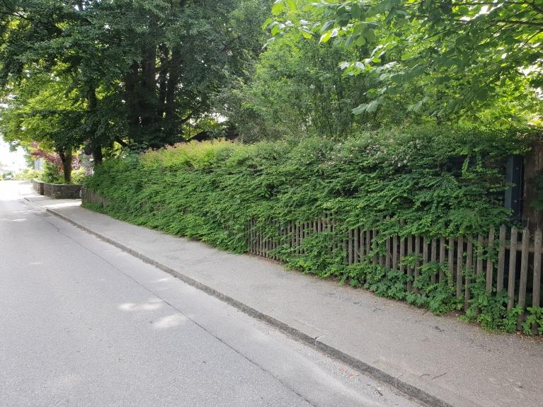 Begrünte Lärmschutzwand von naturawall in Murnau.jpg