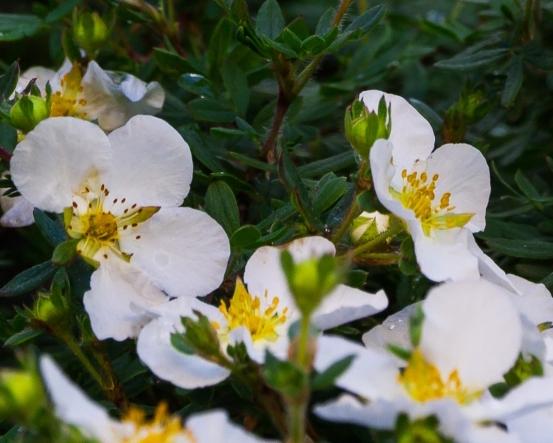 begrünte naturawall Lärmschutzwand mit weißen Blüten