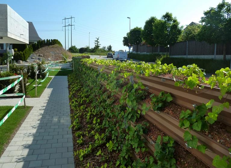 Auch Efeu und andere Rankpflanzen sind geeignet bei unserer naturawall Lärmschutzwand