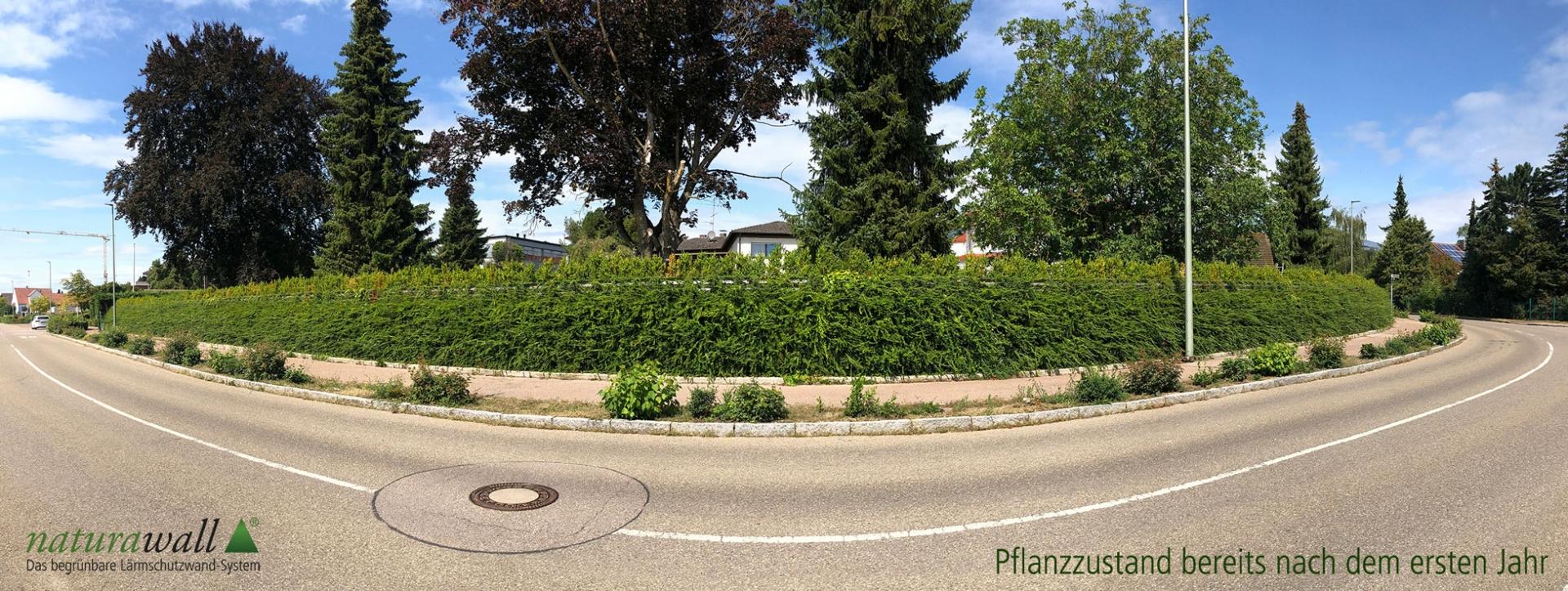 Pflanzzustand nach einem Jahr naturawall begrünbare Lärmschutzwand