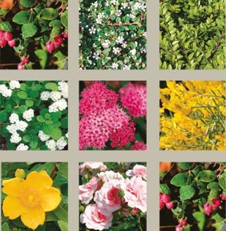 naturawall-pflanzenauswahl.jpg