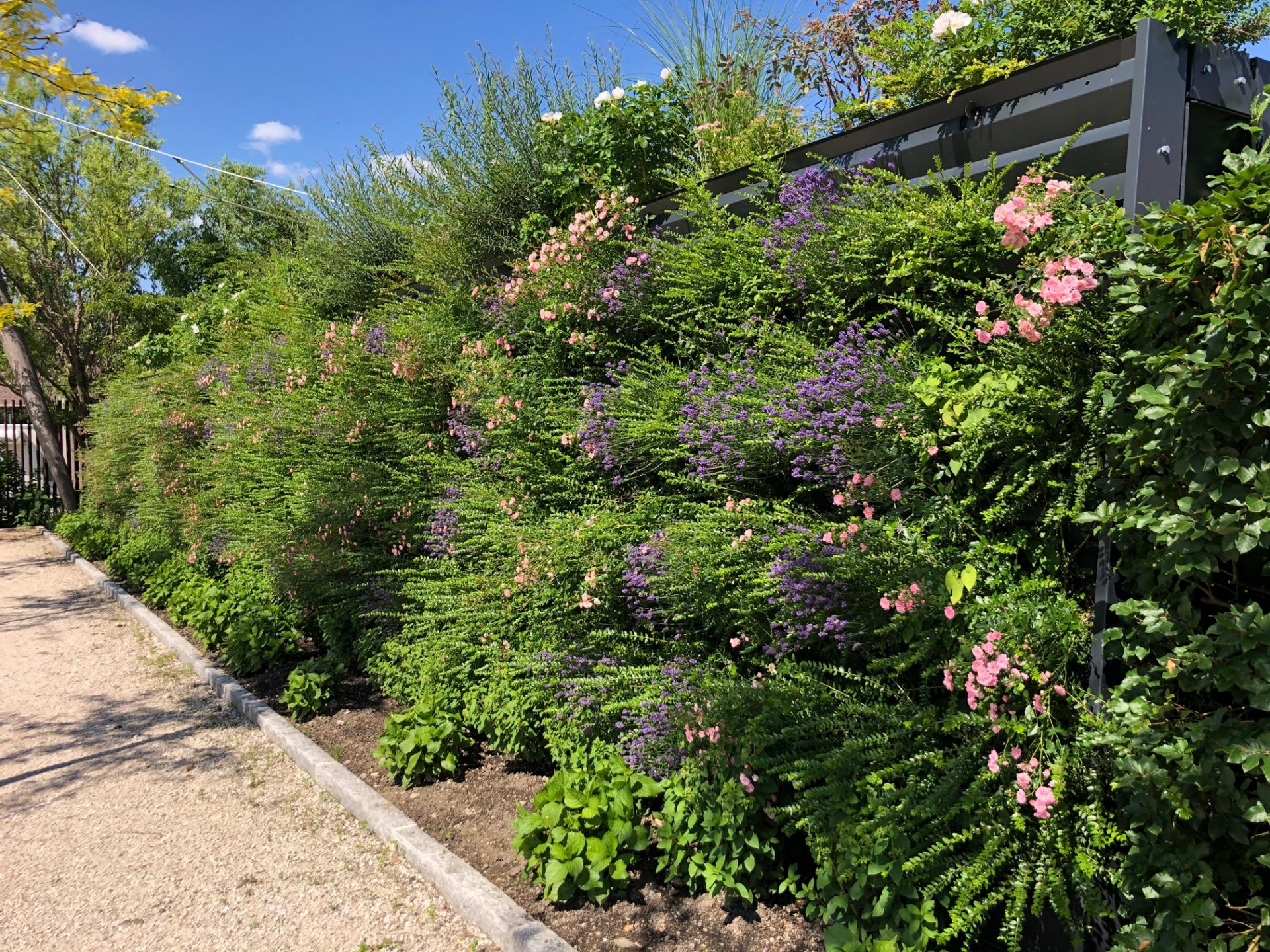 naturawall Lärmschutz im Garten - begrünte Lärmschutzwand